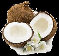 Organic Coconut Oil (Cocos Nucifera)