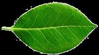 Plant-Derived Hydroxyethylcellulose